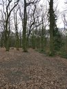 Photo Trees | 1/100 sec | f/1.8 | 4.8 mm | ISO 80