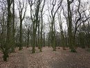 Photo Trees Wide   1/100 sec   f/1.8   4.8 mm   ISO 100