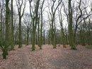 Trees AI | 1/100 sec | f/1.8 | 4.8 mm | ISO 125