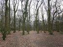 Trees AI HDR | 1/100 sec | f/1.8 | 4.8 mm | ISO 125