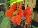 Flower | 1/160 sec | f/3.2 | 5.0 mm | ISO 100
