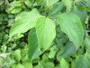 Leaves | 1/100 sec | f/3.2 | 5.0 mm | ISO 100