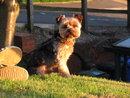 Dog | 1/100 sec | f/5.6 | 34.4 mm | ISO 250