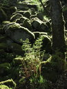 Foliage | 1/125 sec | f/5.0 | 15.7 mm | ISO 80
