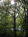 Trees | 1/400 sec | f/5.0 | 13.5 mm | ISO 80