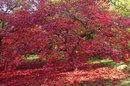 Treescape | 1/60 sec | f/8.0 | 28.0 mm | ISO 400