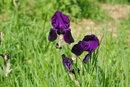 "Purple Flowers | 1/250 sec | f/5.6 | 85.0 mm | ISO 100<br /><a target=""_blank"" href=""https://www.magezinepublishing.com/equipment/images/equipment/K3-III-7699/highres/Pentax-K-3-III-Purple-Flowers-IMGP0154_1623843865.jpg"">High-Res</a>"