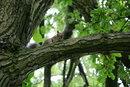 "18-135mm Squirrel | 1/200 sec | f/5.6 | 135.0 mm | ISO 1600<br /><a target=""_blank"" href=""https://www.magezinepublishing.com/equipment/images/equipment/K3-III-7699/highres/Pentax-K3-III-18-135mm-Squirrel-IMGP0417_1626962191.jpg"">High-Res</a>"
