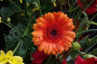 "Photo Flower | 1/20 sec | f/11.0 | 55.0 mm | ISO 200<br /><a target=""_blank"" href=""https://www.magezinepublishing.com/equipment/images/equipment/K5-II-4795/highres/pentax_K5II_sample_photo_flower_1353327640.jpg"">High-Res</a>"