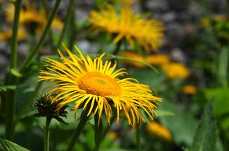 "Close Up Flower | 1/1000 sec | f/8.0 | 55.0 mm | ISO 200<br /><a target=""_blank"" href=""https://www.magezinepublishing.com/equipment/images/equipment/K50-5191/highres/pentax_K50_close_up_flower_1374401503.jpg"">High-Res</a>"