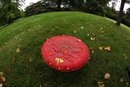 Close Up Fly Agaric | 1/200 sec | f/11 | 8.0 mm | ISO 1600