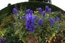 Flower Border | 1/50 sec | f/11 | 8.0 mm | ISO 200