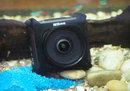 "Nikon KeyMission 360 Underwater | <a target=""_blank"" href=""https://www.magezinepublishing.com/equipment/images/equipment/KeyMission-360-5980/highres/Nikon-KeyMission-360-Underwater_1477316973.jpg"">High-Res</a>"