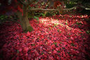 Autumn Leaves   1/50 sec   f/2.8   32.0 mm   ISO 200
