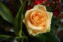 Rose   1/10 sec   f/8   32.0 mm   ISO 200
