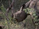 200mm Rhino| 1/800 sec | f/2.8 | 200.0 mm | ISO 200