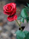 Panasonic Leica 200mm F2,8 Flower Study | 1/200 sec | f/4.0 | 200.0 mm | ISO 800