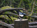 Panasonic Leica 200mm F2,8 With Tc Magpie | 1/200 sec | f/4.0 | 280.0 mm | ISO 800