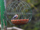 Panasonic Leica 200mm F2,8 With Tc Male Bullfinch On Feeder | 1/200 sec | f/4.0 | 280.0 mm | ISO 800