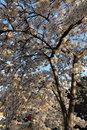Blossom | 1/125 sec | f/4.5 | 24.0 mm | ISO 100