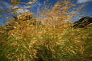 Grasses In The Wind | 1/250 sec | f/11.0 | 12.0 mm | ISO 200