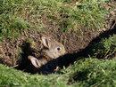 Rabbits At Home | 1/500 sec | f/8.0 | 213.0 mm | ISO 400