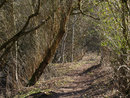 Woodland Landscape | 1/25 sec | f/16.0 | 100.0 mm | ISO 200