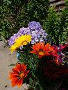 Leica DG 10 25mm F1,7 Garden Flowers | 1/160 sec | f/16.0 | 11.0 mm | ISO 200