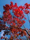 Red Leaves Highres | 1/804 sec | f/2.2 | ISO 100