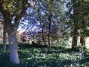 Trees | 1/231 sec | f/2.0 | ISO 100