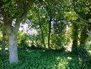 Trees | 1/100 sec | f/2.0 | ISO 160