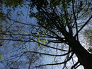 Tree | 1/1000 sec | f/4.0 | 4.3 mm | ISO 80