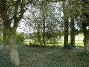 Trees | 1/60 sec | f/3.9 | 4.5 mm | ISO 100