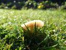 "Mushroom | 1/800 sec | f/2.8 | 4.5 mm | ISO 100 | <a target=""_blank"" href=""https://www.magezinepublishing.com/equipment/images/equipment/Lumix-DMCFZ200-4715/highres/panasonic-lumix-dmc-fz200-creative-control-mushroom_1348738890.jpg"">High-Res</a>"