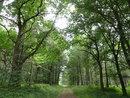 Trees | 1/60 sec | f/2.8 | 4.5 mm | ISO 100