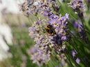 Bee | 1/640 sec | f/5.6 | 35.0 mm | ISO 200