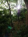 Trees | 1/200 sec | f/3.5 | 12.0 mm | ISO 200