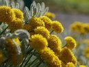 Yellow Flowers Bokeh | 1/640 sec | f/5.6 | 35.0 mm | ISO 200