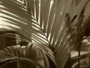 Sepia | 1/25 sec | f/4.5 | 10.6 mm | ISO 400