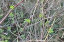 Plants | 1/80 sec | f/3.4 | 18.8 mm | ISO 160