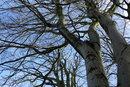Trees | 1/250 sec | f/3.2 | 15.0 mm | ISO 125