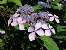 "Flowers | 1/400 sec | f/9.0 | 32.0 mm | ISO 200 | <a target=""_blank"" href=""https://www.magezinepublishing.com/equipment/images/equipment/Lumix-G100-7627/highres/Panasonic-Lumix-G100-Flowers-P1010234_1595335184.jpg"">High-Res</a>"