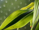 "Green Leaves | 1/160 sec | f/6.3 | 32.0 mm | ISO 200 | <a target=""_blank"" href=""https://www.magezinepublishing.com/equipment/images/equipment/Lumix-G100-7627/highres/Panasonic-Lumix-G100-Green-Leaves-P1010319_1595491850.jpg"">High-Res</a>"