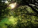 "Sun Through Trees | 1/60 sec | f/5.6 | 30.0 mm | ISO 400 | <a target=""_blank"" href=""https://www.magezinepublishing.com/equipment/images/equipment/Lumix-G100-7627/highres/Panasonic-Lumix-G100-Sun-through-trees-P1010241_1595335202.jpg"">High-Res</a>"