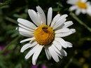 Flower | 1/1000 sec | f/8.0 | 60.0 mm | ISO 200