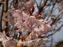 Blossom | 1/400 sec | f/10.0 | 32.0 mm | ISO 200