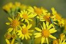 Flowers Green Bug | 1/500 sec | f/6.3 | 105.0 mm | ISO 100