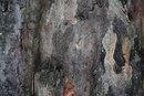 Texture In Bark 2 | 0.5 sec | 85.0 mm | ISO 100