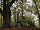 Trees - Telephoto | 1/270 sec | f/2.4 | 2.4 mm | ISO 50
