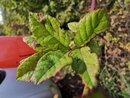 Super Macro Leaves Greenery | 1/900 sec | f/2.2 | 4.0 mm | ISO 125